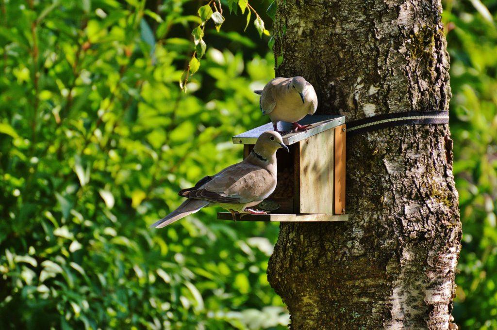 Wild Birds Feeders