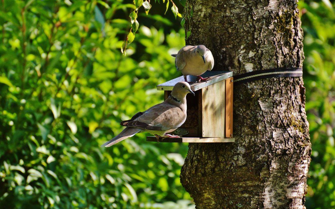Attracting Wildlife to Your Garden During The Cold Season Wild Birds Feeders