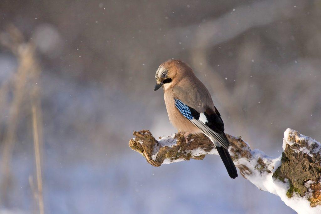 Wild Birds Feeder