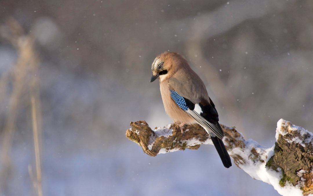 The Use of Wild Birds Feeder in The Winter Season