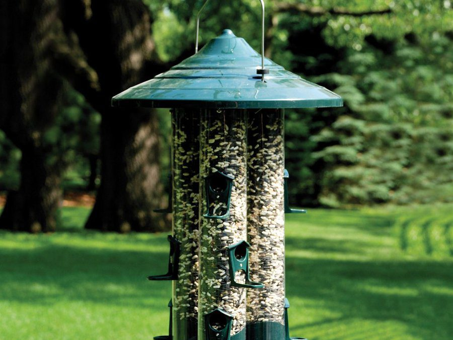 How to Feed Birds in Summer with Wild Bird Feeding Stations
