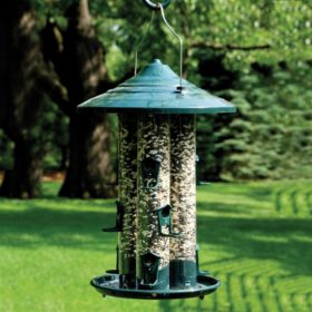 Wild Bird Feeding Stations