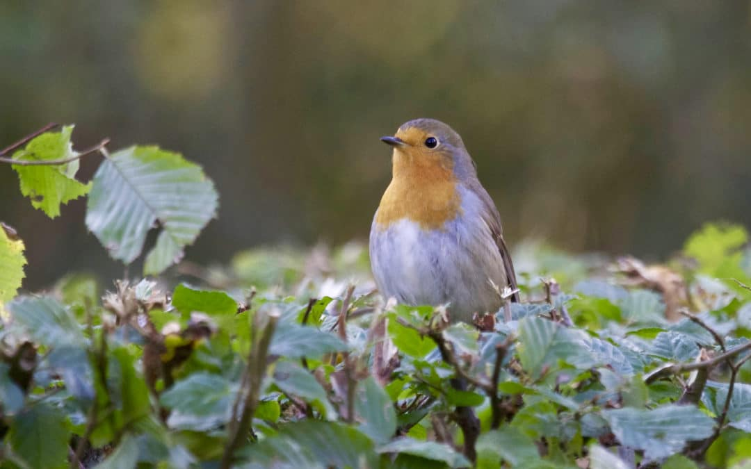 How to Create a Homemade Bird Feeding Station?